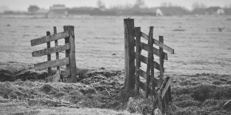 Ruined Fence